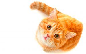 Стерилизовать кошку
